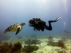 Linaw Beach Resort Scuba Diving In Bohol